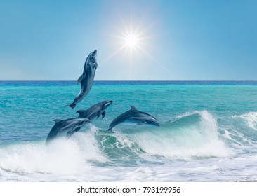 group of dolphins jumping on the water - Beautiful seascape and blue sky