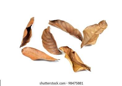 group of dry leaves