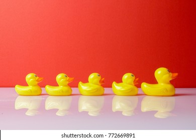 A group of ducks following big duck. Leadership conceptual.