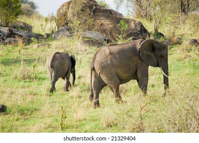 Group of elephants in the African Serengeti