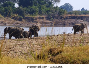 A group of elephants bathing and drinking on the banks of the Luangwa river, South Luangwa National Park, Zambia. This image was taken whilst on foot on a walking safari, for which the park is famous