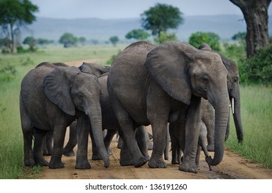 Group of elephants crossing the road