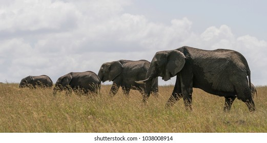 A Group of Elephants in the Masai Mara National Park
