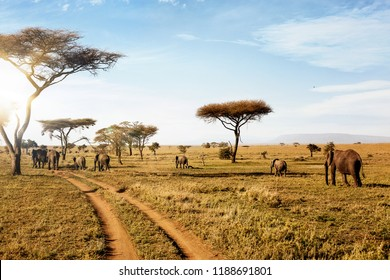 Group of elephants walking in beautiful national park Serengeti, Tanzania, Africa.