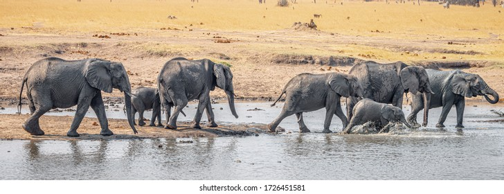 Group of Elephants at a waterhole in the Kruger National Park, South Africa, during winter season