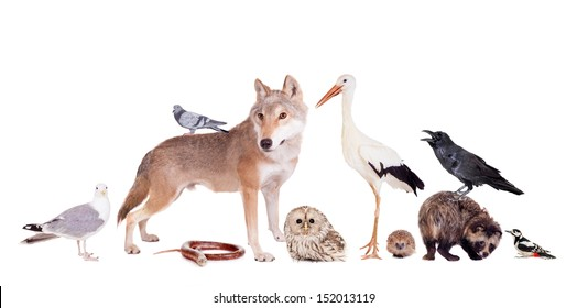 Group of eurasian animals together on the white