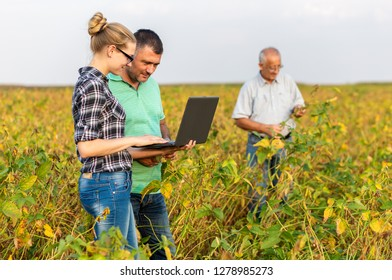 Group of farmers with laptop standing in a field examining soybean crop.