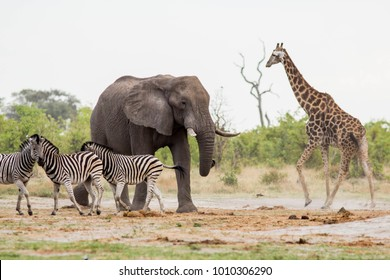 Group of favorite african animals together, Namibia