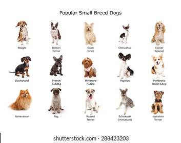 A group of fifteen common small breed domestic dogs