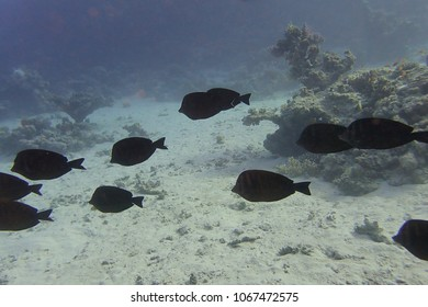Group of fish in the Red Sea.