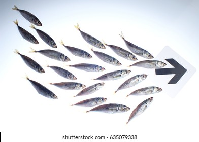 group of fishes following the arrow mark, isolated on white