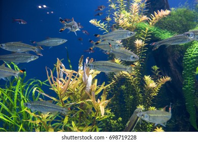 group of fishes swimming in an aquarium