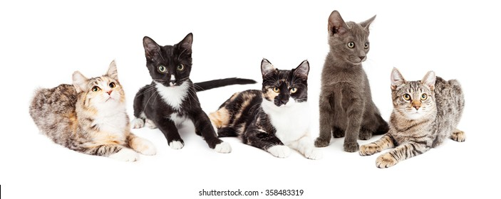 Group of five adorable little kittens of different breeds sitting together on a white background