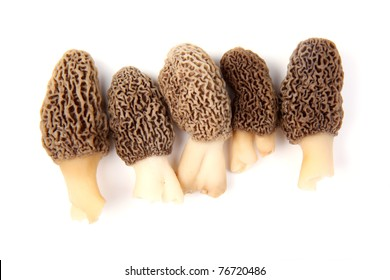 Group of five gray morel mushroom (Morchella esculenta) fruiting bodies collected in a back yard in Indiana isolated against a white background