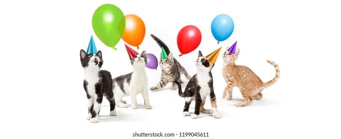 Party Cat Images, Stock Photos & Vectors | Shutterstock