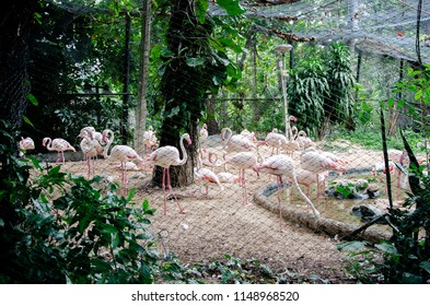 group of flamingo wild animal in the zoo