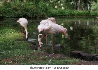 A group of flamingos at the pond