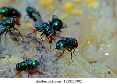 A group of fly insect