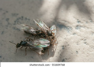Group of flying ants on marble in summer