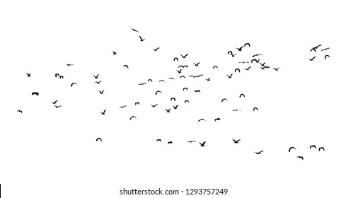 Group of flying duck teal birds flock isolated on white background.