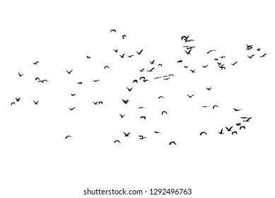Group of flying duck teal isolated on white .