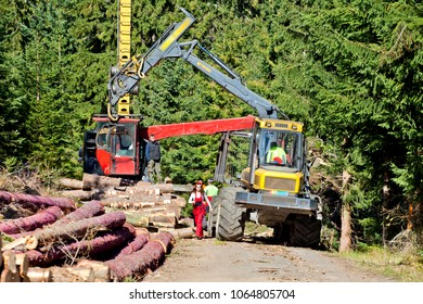 Group of forestry workers on station of logging timber