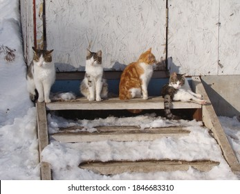 a group of four different street cats at a door on wooden steps in first snow on a sunny day