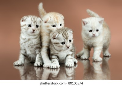 group of four fluffy  beautiful kitten, breed scottish-fold,  on brown  background