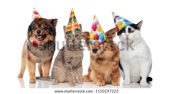 Group Of Four Funny Cats And Dogs With Birthday Hats Standing Sitting On White Background