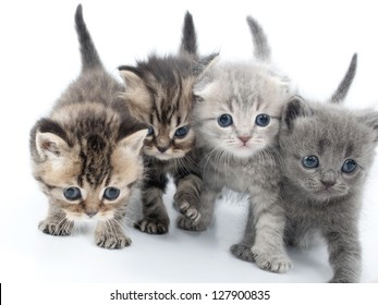 group of four kittens walking together