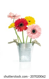 Group of Fresh Daisy in zinc bucket  isolated, Clipping path included