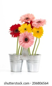 Group of Fresh Daisys in zinc bucket  isolated