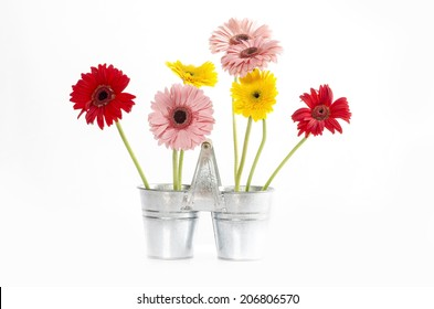 Group of Fresh Daisys in zinc bucket  isolated,