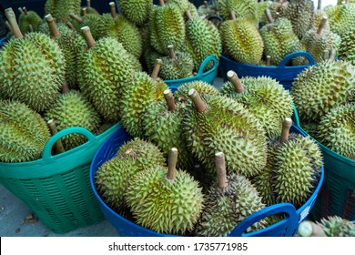 Group of fresh durians fruit prepare  in the basket for sale to the buyer or packing for transportation in fruit market,Thailand.Durian is king of tropical fruits.