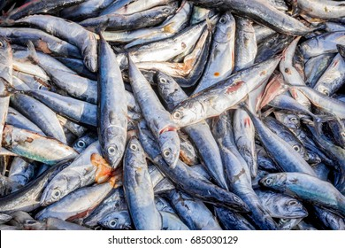 Group of fresh fish in market