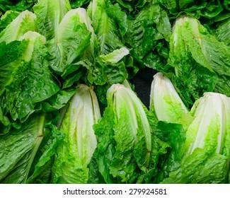 Romaine Lettuce Images, Stock Photos & Vectors | Shutterstock