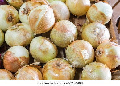 Group of fresh organically grown vidalia sweet onion in farmer market at Texas, US. Full frame of onion. This is named as Georgia's official state vegetable in 1990. Harvest, agricultural background.