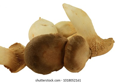 Group fresh raw organic King Oyster Mushrooms taken (cut) from the soil isolated over white background
