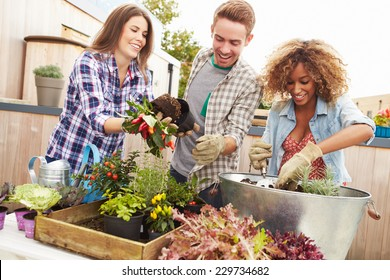 Group Of Friends Planting Rooftop Garden Together