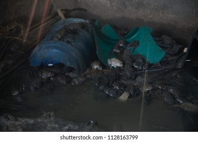 Group of frogs in pool.Agriculture concept.