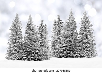 Group of frost covered trees in snow with twinkling silver background