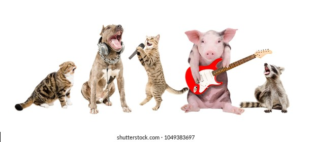 Group of funny cute animals musicians, isolated on white background