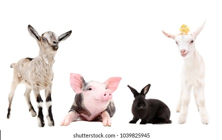 Group of funny farm animals together, isolated on white background