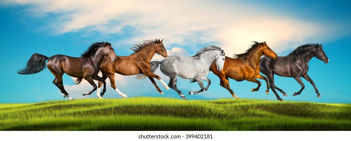group of galloping horses on a green grass on a sky background