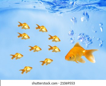 A group of goldfishes following their leader (under water)
