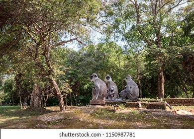 Group of gray langurs in forest