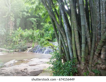 Group of green bamboo trees are combined at blurred waterfalls in tropical forest. Bamboo patterns, stains and details of bamboo, which have different shades according to age.Nature Background.