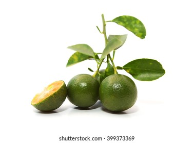 Group of green calamondin and leaf used instead of lemon isolated on white background