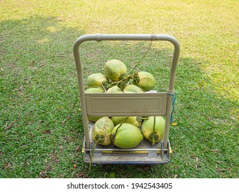 Group of green coconuts on folding utility cart. Space for text. Healthy fruits concept.