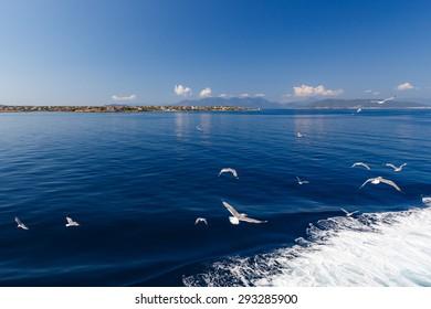 Group of gulls flying towards the island of Aegina, next to ship